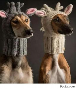 reindeer warm