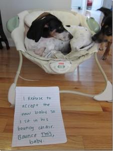 dog shame 10