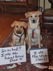 dog shame 9