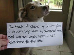 dog shame 3
