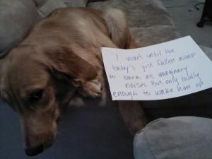 dog shame 7